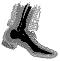 X-Ray (PSF).png