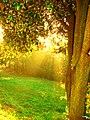 Y que la luz.....nos acompañe en el camino .. - panoramio.jpg