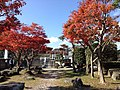 Yabakeimachi Oaza Kakisaka, Nakatsu, Oita Prefecture 871-0405, Japan - panoramio.jpg