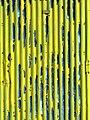 Yellow (13884741840).jpg