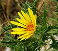 Yellow flower with critters-2.jpg