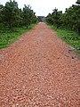 Zicht op gereconstrueerde Romeinse weg--Archeoregio 13 - De Meern - 20427044 - RCE.jpg
