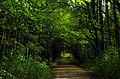 """""""Тунель"""" в ботанічному саду DSC 3391.JPG"""