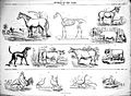 """Animals of the farm, sheet VI"" after G. Stell Wellcome L0019090.jpg"