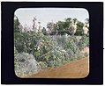 """Millefiori,"" Albert Barnes Boardman house, Great Plains Road and Coopers Neck Lane, Southampton, New York. LOC 7221369040.jpg"