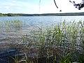+20180611Müritz-Nationalpark.Feisneck See.-024.jpg