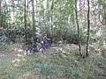 +20180611Müritz-Nationalpark.nahe Kratzeburg.-056.jpg