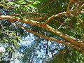 Árvore fina envergada 3.jpg