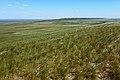 Вид с горы Биктастау в восточном направлении - panoramio.jpg