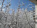 День чудесный - panoramio.jpg