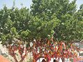 Дерево желаний - panoramio (2).jpg