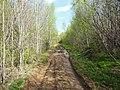 Дорога за заводом 777, конец мая 2013 - panoramio (1).jpg