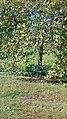Зелёная скамья в пока ещё зелёной листве.jpg