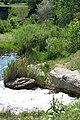 Ландшафтний заказник Річка Гайчур 12.jpg