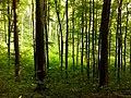 Ліс біля Чортових скель Винниківське л-во.jpg