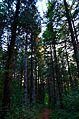Миљаковачка шума1.JPG