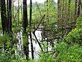 Около озера - panoramio.jpg