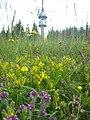 Орхидея и панаска детелина 27.jpg