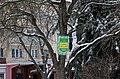 Охоронна табличка «Чортківської катальпи» P1190217.jpg