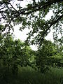 Парк шума Гази Баба во мај (101).JPG