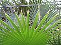 Растение(3).jpg