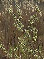 Святошинський лісопарк IMG 7906.jpg