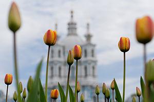 Русский: Смольный собор. Весна 2009 года