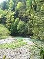 Тисо-самшитовая роща, берег р.Хосты.JPG