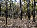Украина, Киев - Голосеевский лес 65.jpg