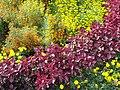 Цветы в Воронцово.jpg