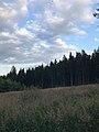 Անտառ-ծառեր.jpg