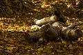 پاییزدر ایران-قاهان قم-Autumn in iran-qom 35.jpg