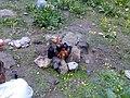 چایی شامورتی درانتهای دره خرسنگ لار Tea in Shamoorti, Kharsang valley, Alborz, Dasht-e Lar, Tehran, Iran - panoramio.jpg