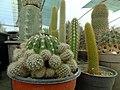 گلخانه کاکتوس دنیای خار در قم. کلکسیون انواع کاکتوس 41.jpg