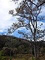 ต้นไม้และทุ่งนาข่างทางไปบ้านปากลา-Tree-Rice field on the way to Pakla - panoramio.jpg