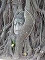 เศียรพระในรากไม้ วัดมหาธาตุ Buddha in the root of Wat Mahathat.jpg