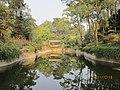 南山植物园-倒影如画 - panoramio.jpg