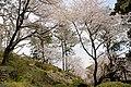 小田原城 - panoramio (3).jpg