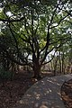 山景 - panoramio (12).jpg
