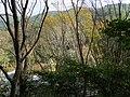 滿月圓森林遊樂區 Manyueyuan Forest Recreation Area - panoramio (3).jpg