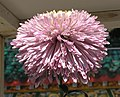 菊花-翎管型 Chrysanthemum morifolium Plume-tubular-series -香港圓玄學院 Hong Kong Yuen Yuen Institute- (9190628727).jpg