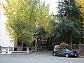 은행나무와 가을의 추억 - panoramio.jpg