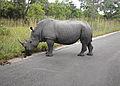 02 Rhino marking its territory SA 04 (Flipbook).jpg