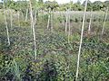 0581jfLandscapes Roads Vegetables Fields Binagbag Angat Bulacanfvf 22.JPG