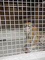 09835jfPeoples Park Crab Monkey Garden Valenzuela Cityfvf 07.JPG