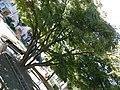 10081 Castellamonte TO, Italy - panoramio (38).jpg