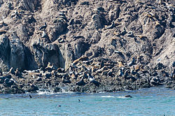 17-Mile Drive Bird Rock 02 2013.jpg