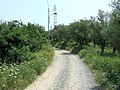17012 Albissola Marina, Province of Savona, Italy - panoramio.jpg