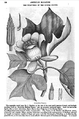 1834 TulipTree AmericanMagazine v1 Boston.png