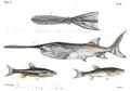 1844 BostonJournal NaturalHistory v4 illus8.png